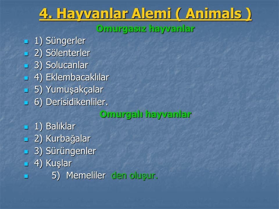 4. Hayvanlar Alemi ( Animals )