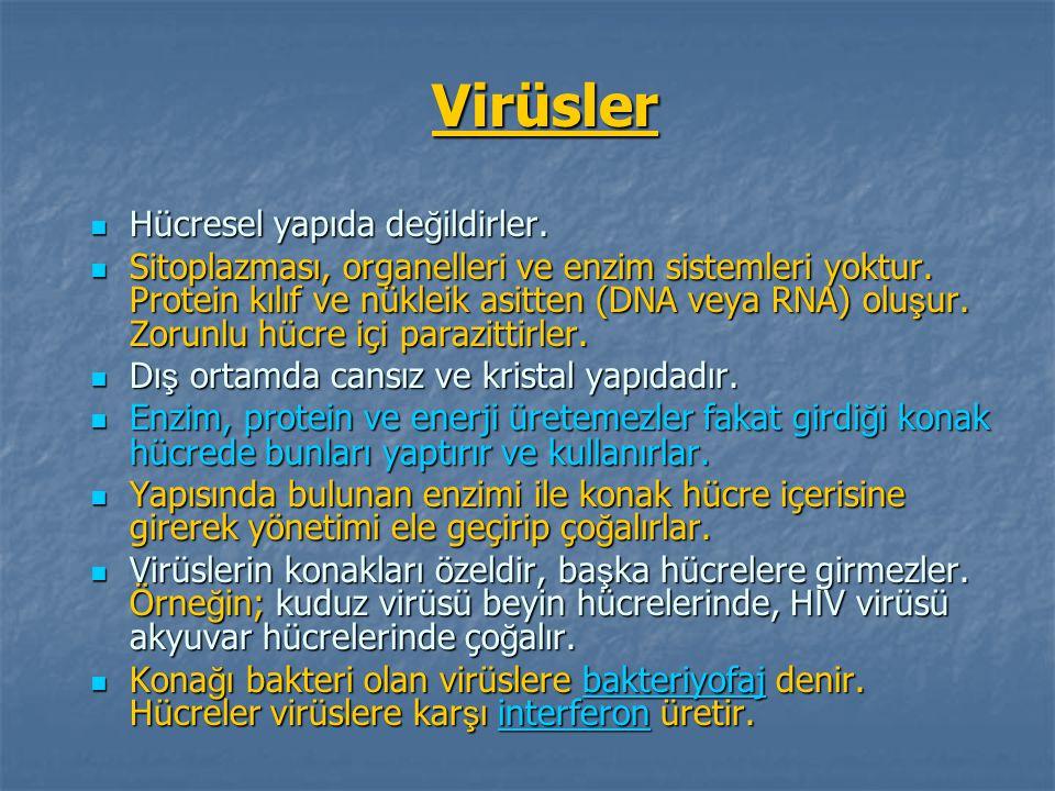 Virüsler Hücresel yapıda değildirler.