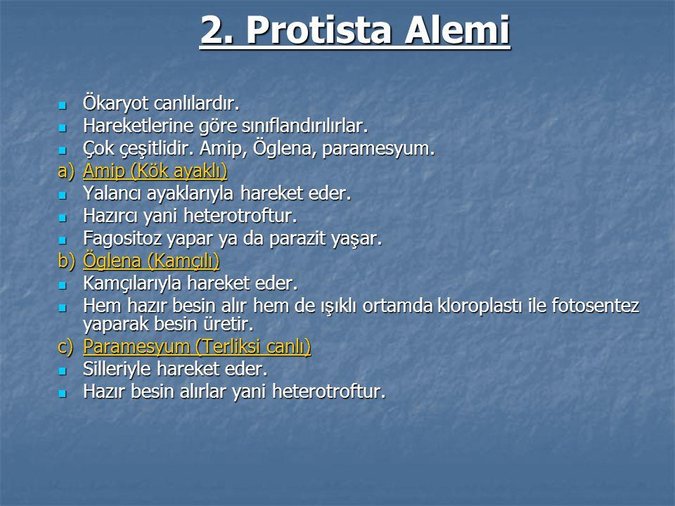 2. Protista Alemi Ökaryot canlılardır.