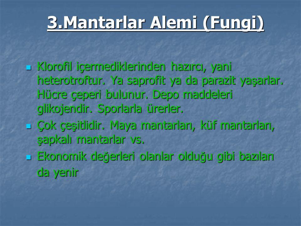 3.Mantarlar Alemi (Fungi)