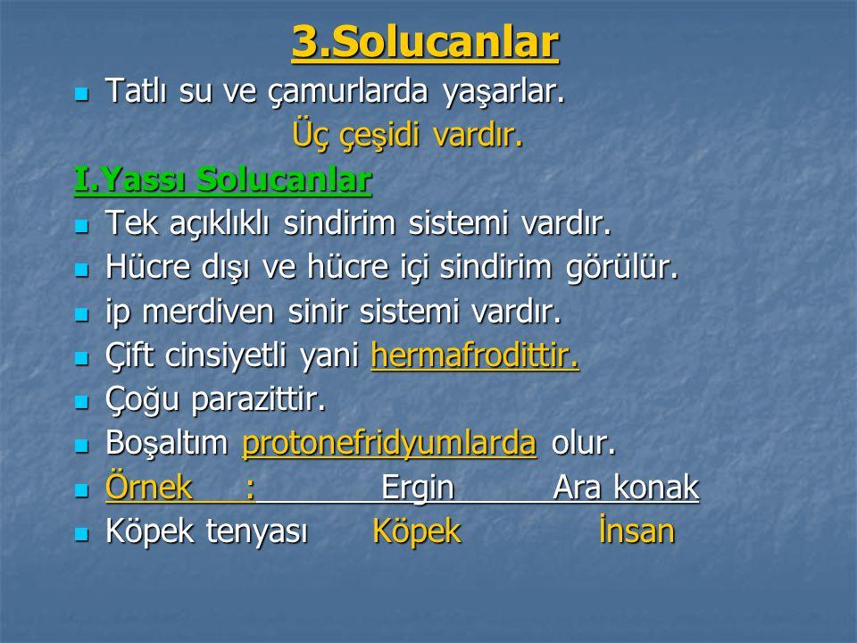 3.Solucanlar Tatlı su ve çamurlarda yaşarlar. Üç çeşidi vardır.