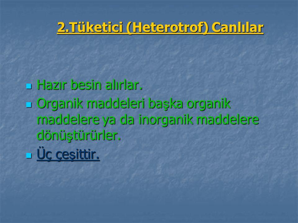 2.Tüketici (Heterotrof) Canlılar