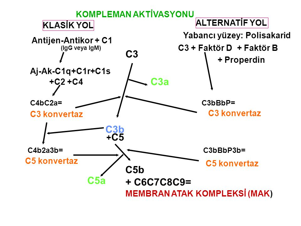 C3 C3a C3b C5b C5a + C6C7C8C9= KOMPLEMAN AKTİVASYONU ALTERNATİF YOL