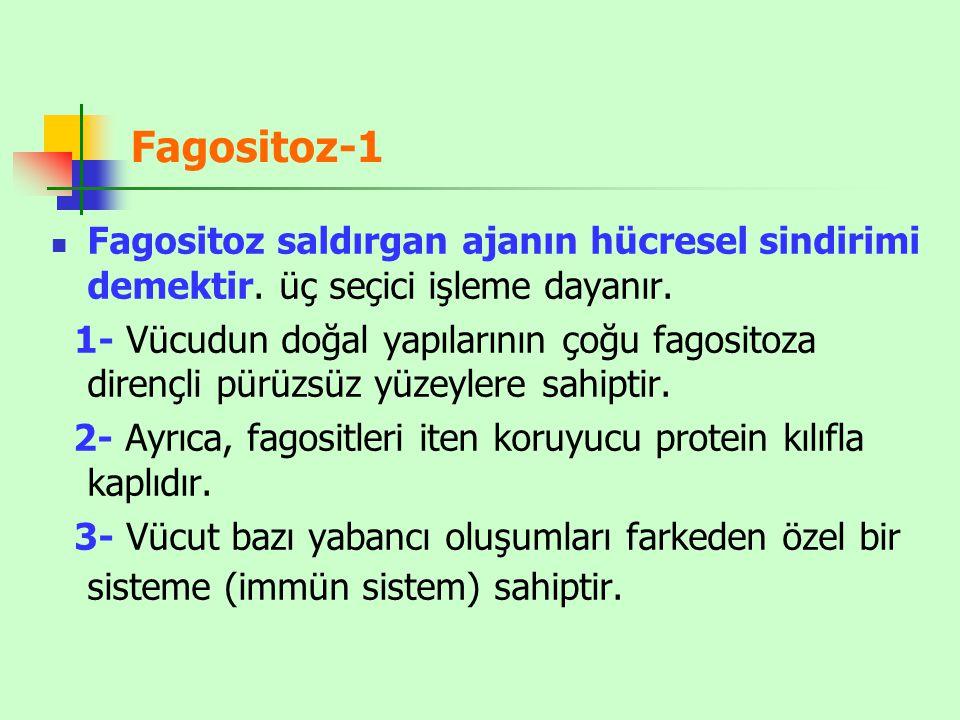 Fagositoz-1 Fagositoz saldırgan ajanın hücresel sindirimi demektir. üç seçici işleme dayanır.