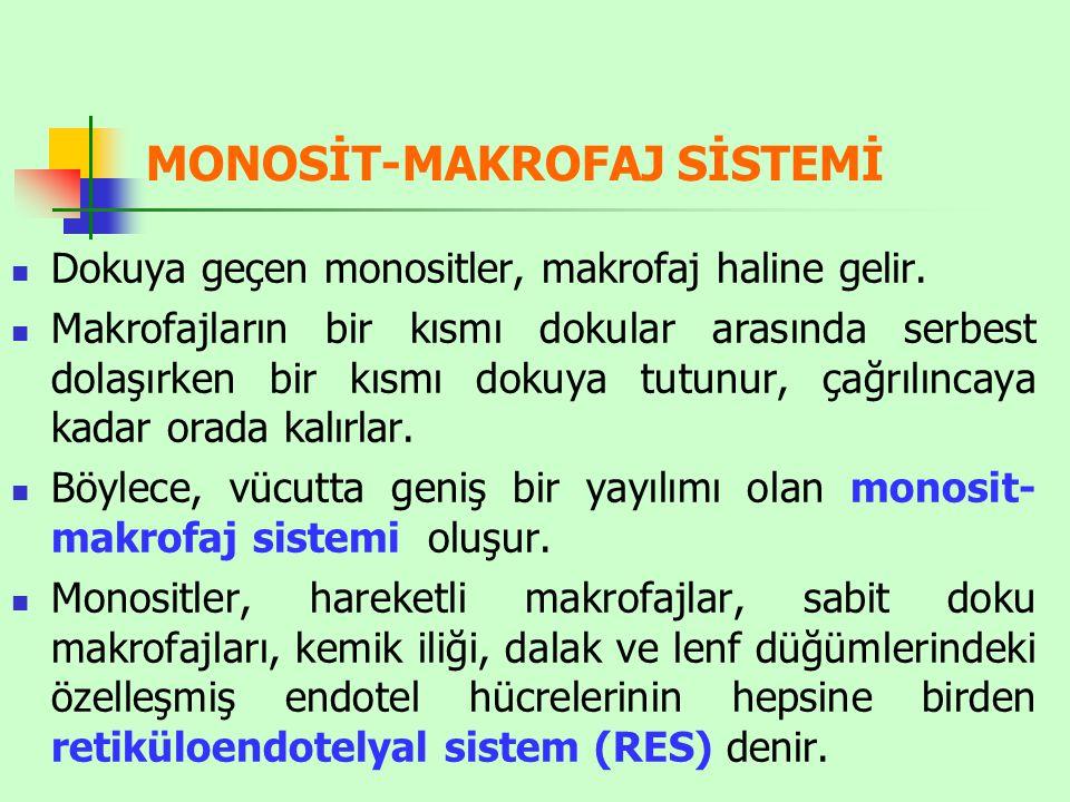 MONOSİT-MAKROFAJ SİSTEMİ