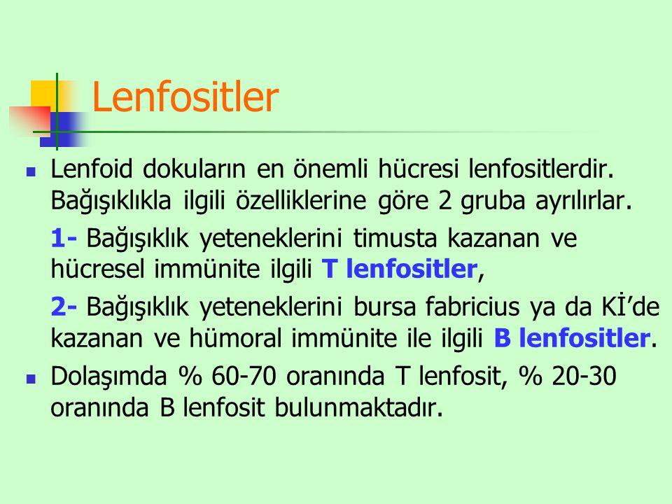 Lenfositler Lenfoid dokuların en önemli hücresi lenfositlerdir. Bağışıklıkla ilgili özelliklerine göre 2 gruba ayrılırlar.