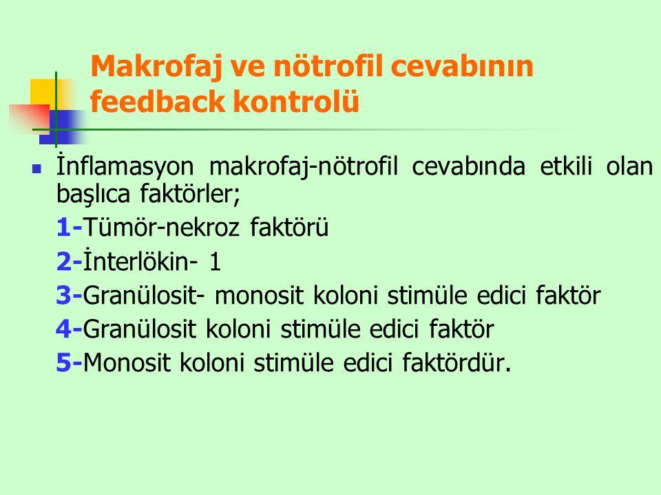 Makrofaj ve nötrofil cevabının feedback kontrolü