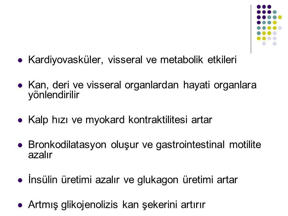 Kardiyovasküler, visseral ve metabolik etkileri