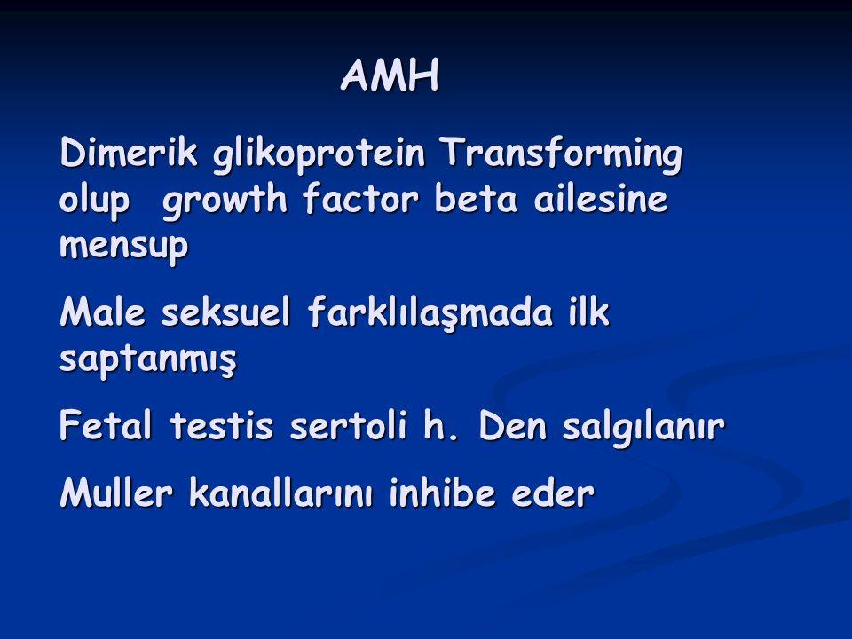 AMH Dimerik glikoprotein Transforming olup growth factor beta ailesine mensup. Male seksuel farklılaşmada ilk saptanmış.