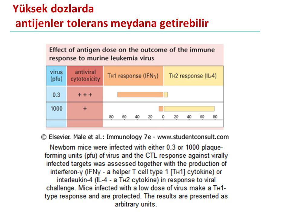 Yüksek dozlarda antijenler tolerans meydana getirebilir
