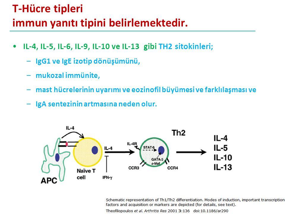 T-Hücre tipleri immun yanıtı tipini belirlemektedir.