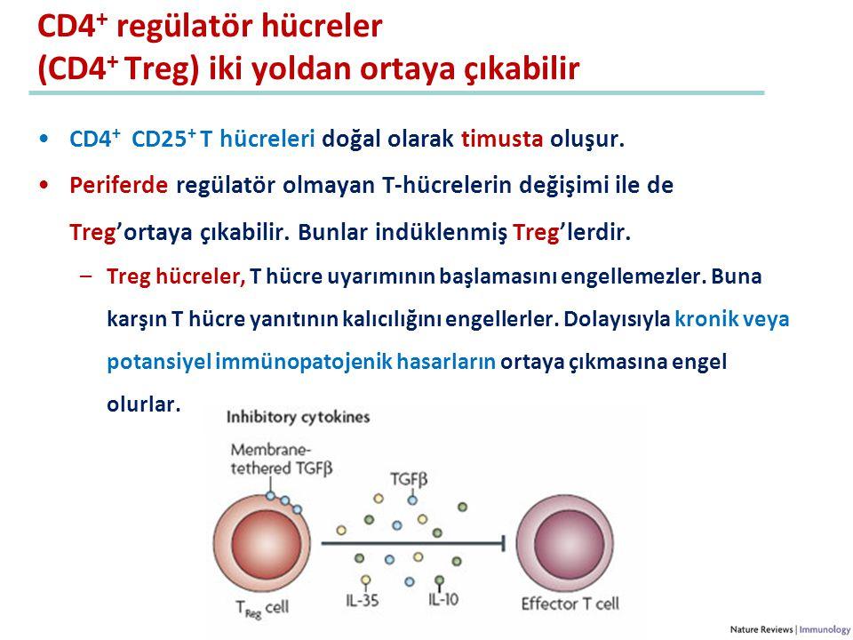 CD4+ regülatör hücreler (CD4+ Treg) iki yoldan ortaya çıkabilir