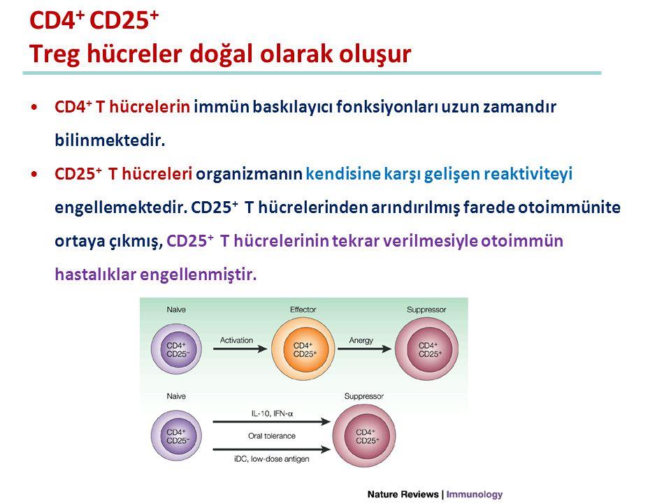 CD4+ CD25+ Treg hücreler doğal olarak oluşur