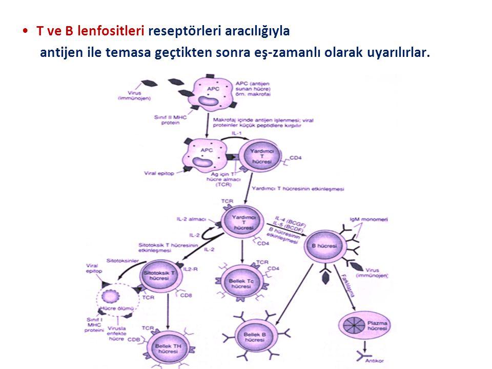 T ve B lenfositleri reseptörleri aracılığıyla