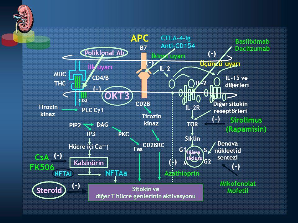 diğer T hücre genlerinin aktivasyonu