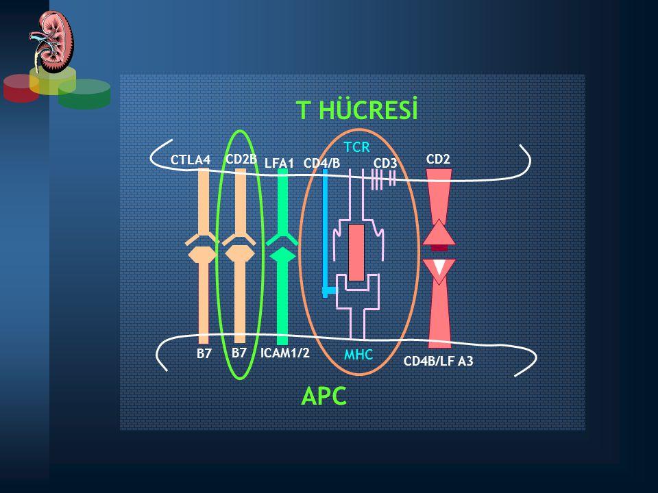 T HÜCRESİ APC TCR MHC B7 CD2 CD3 CTLA4 CD2B LFA1 CD4/B CD4B/LF A3