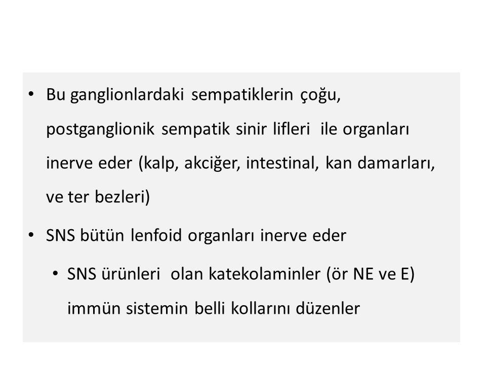 Bu ganglionlardaki sempatiklerin çoğu, postganglionik sempatik sinir lifleri ile organları inerve eder (kalp, akciğer, intestinal, kan damarları, ve ter bezleri)
