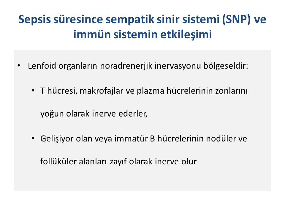 Sepsis süresince sempatik sinir sistemi (SNP) ve immün sistemin etkileşimi