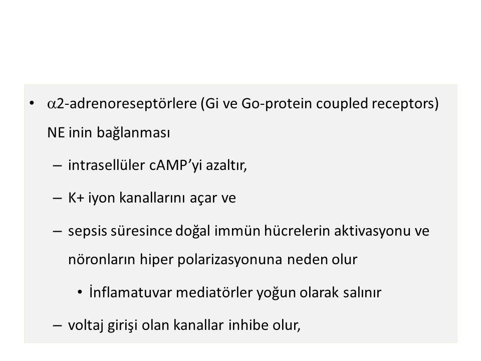2-adrenoreseptörlere (Gi ve Go-protein coupled receptors) NE inin bağlanması