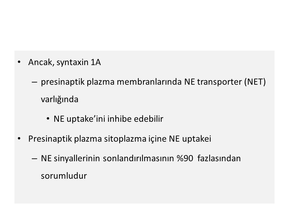 Ancak, syntaxin 1A presinaptik plazma membranlarında NE transporter (NET) varlığında. NE uptake'ini inhibe edebilir.