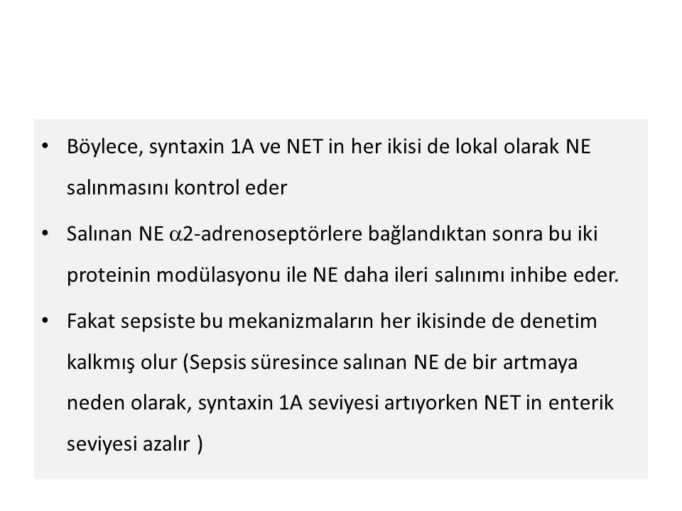 Böylece, syntaxin 1A ve NET in her ikisi de lokal olarak NE salınmasını kontrol eder
