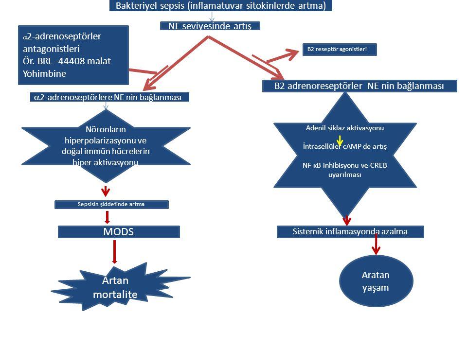 Bakteriyel sepsis (inflamatuvar sitokinlerde artma)