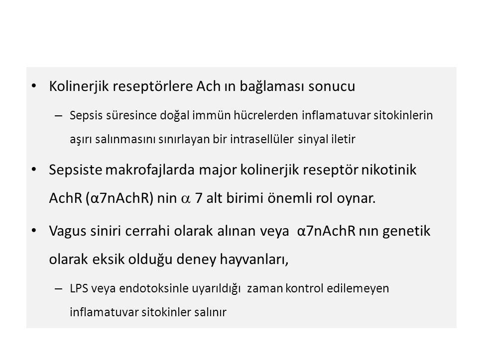 Kolinerjik reseptörlere Ach ın bağlaması sonucu