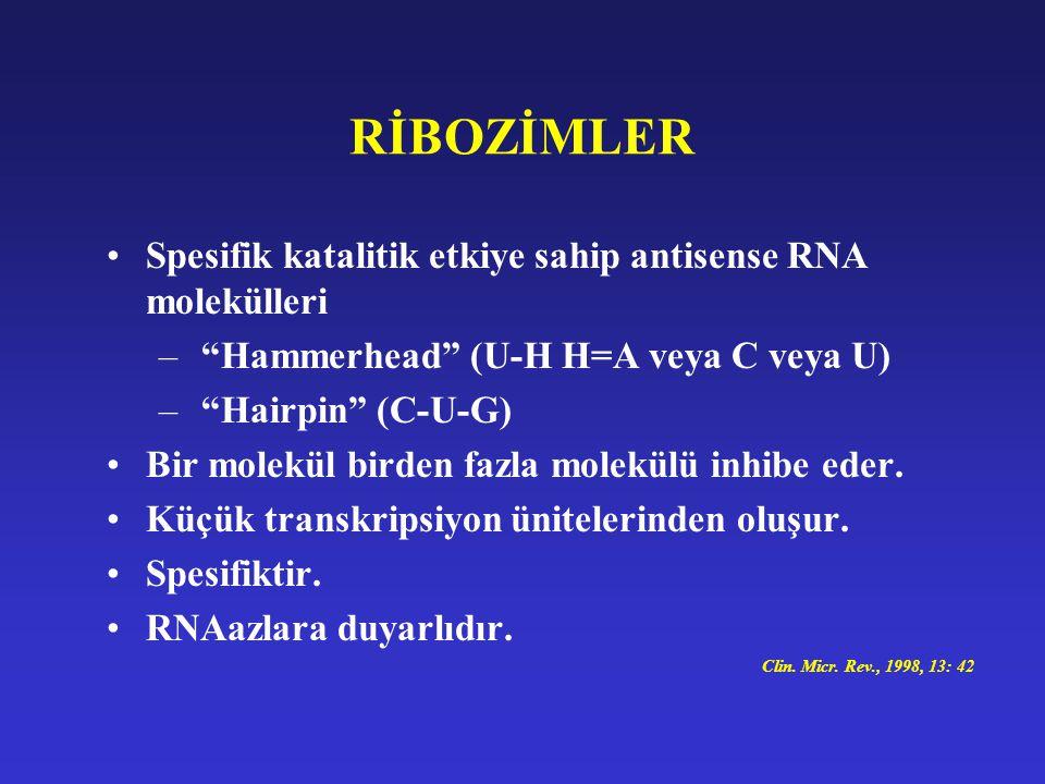 RİBOZİMLER Spesifik katalitik etkiye sahip antisense RNA molekülleri