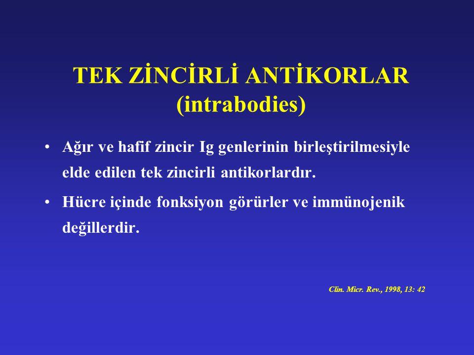 TEK ZİNCİRLİ ANTİKORLAR (intrabodies)