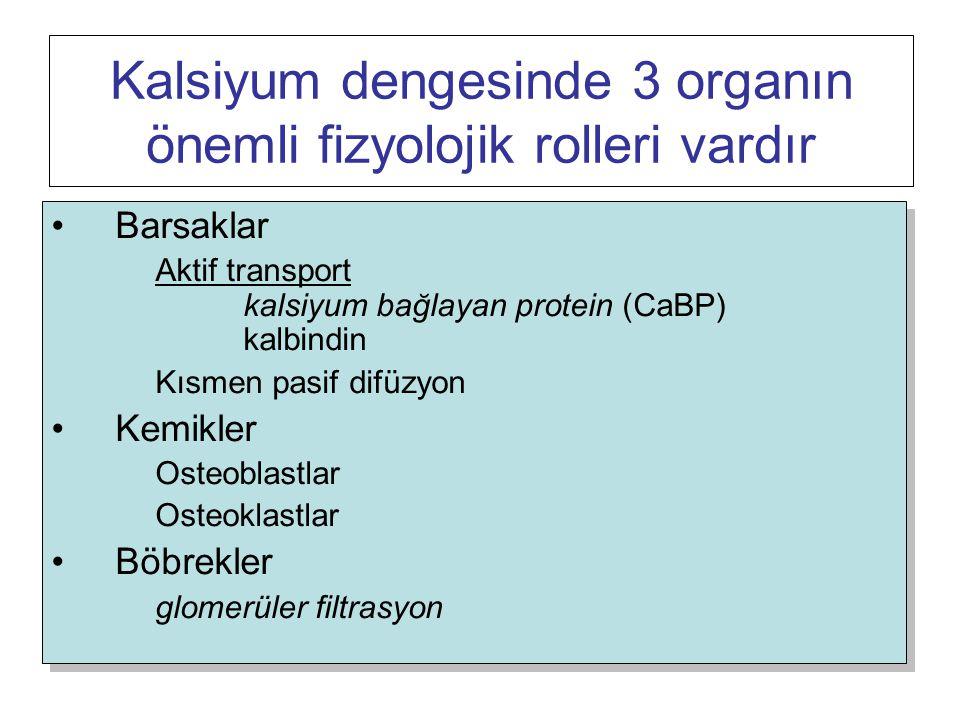 Kalsiyum dengesinde 3 organın önemli fizyolojik rolleri vardır
