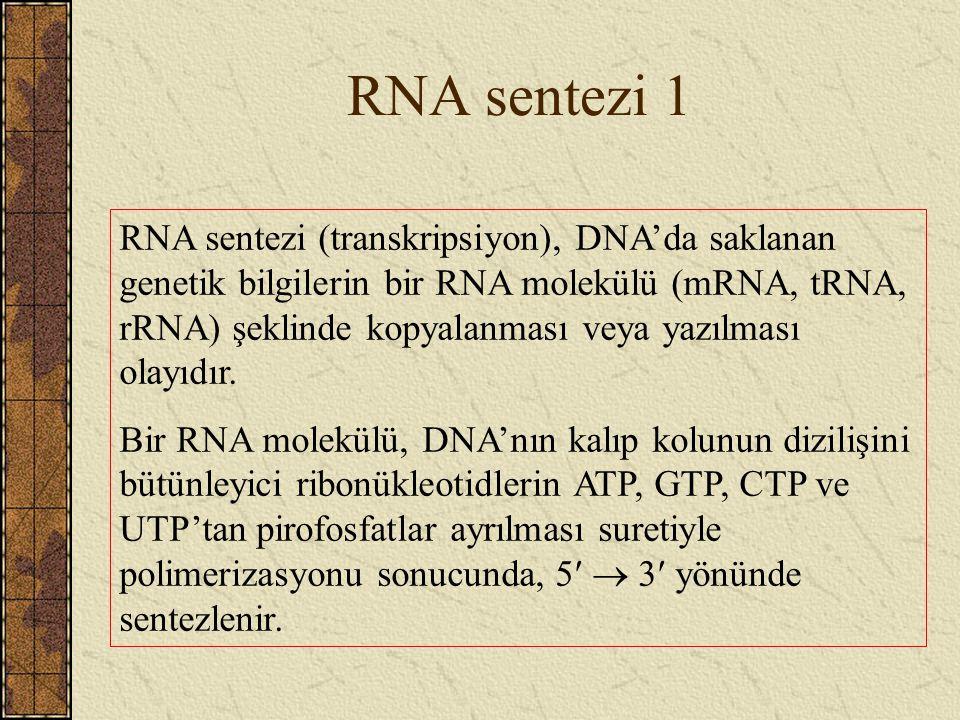 RNA sentezi 1