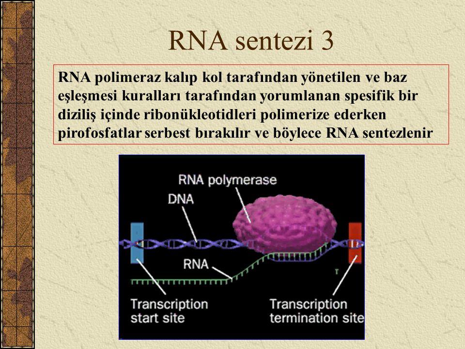 RNA sentezi 3