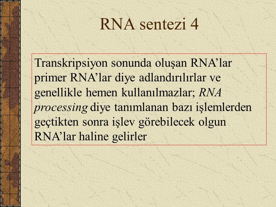 RNA sentezi 4