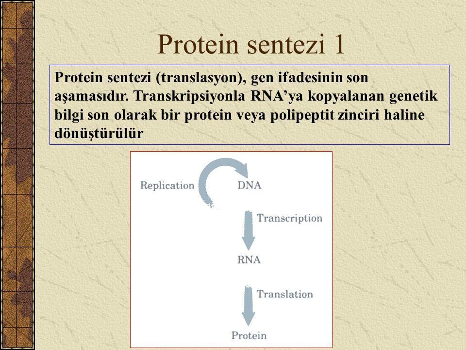 Protein sentezi 1