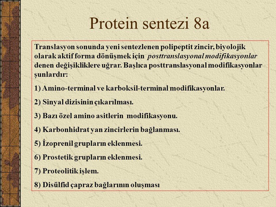 Protein sentezi 8a