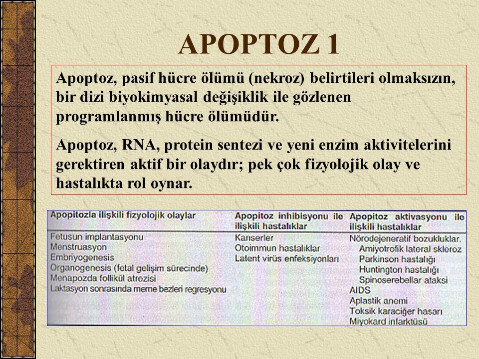 APOPTOZ 1 Apoptoz, pasif hücre ölümü (nekroz) belirtileri olmaksızın, bir dizi biyokimyasal değişiklik ile gözlenen programlanmış hücre ölümüdür.