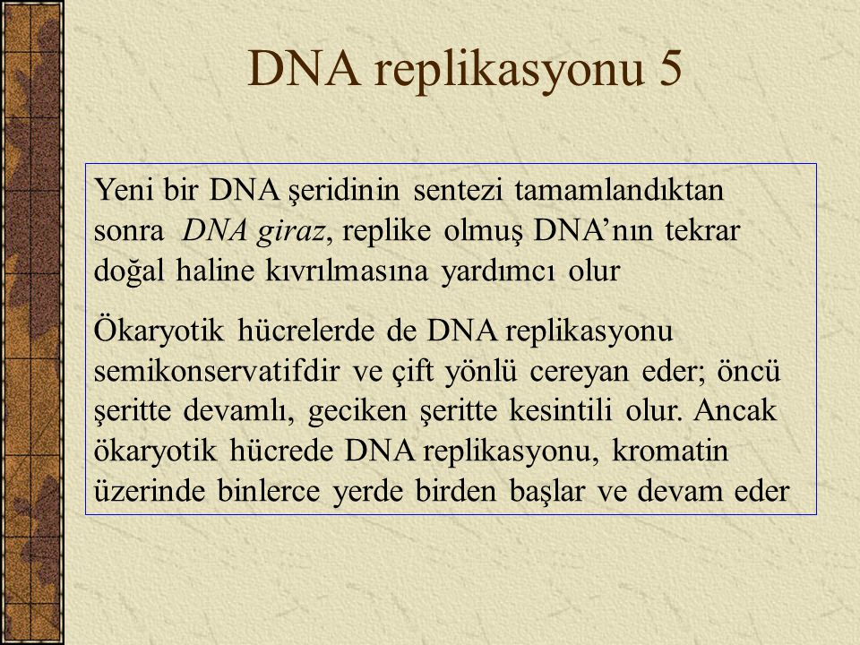 DNA replikasyonu 5
