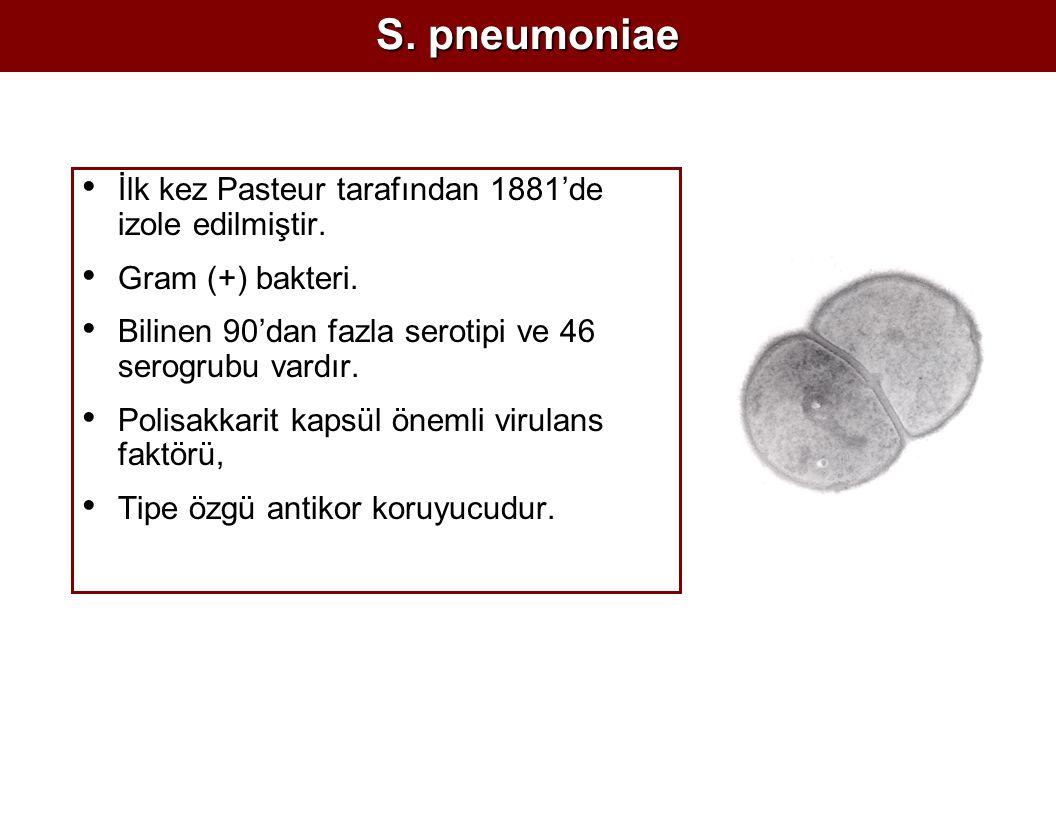S. pneumoniae İlk kez Pasteur tarafından 1881'de izole edilmiştir.
