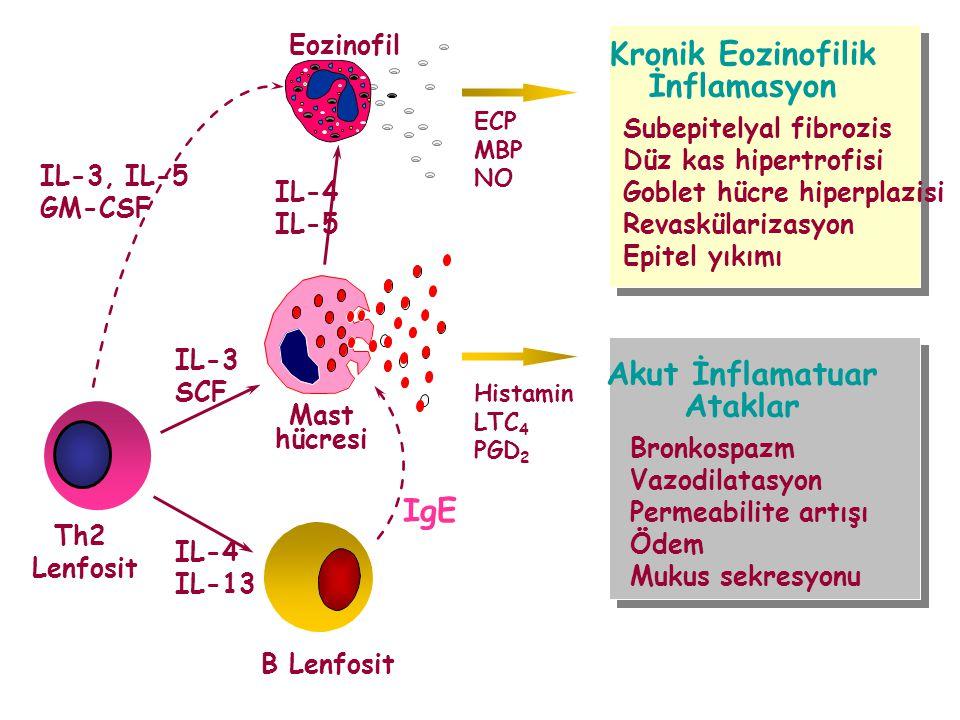 Kronik Eozinofilik İnflamasyon Akut İnflamatuar Ataklar