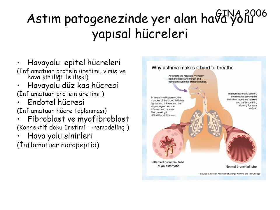 Astım patogenezinde yer alan hava yolu yapısal hücreleri