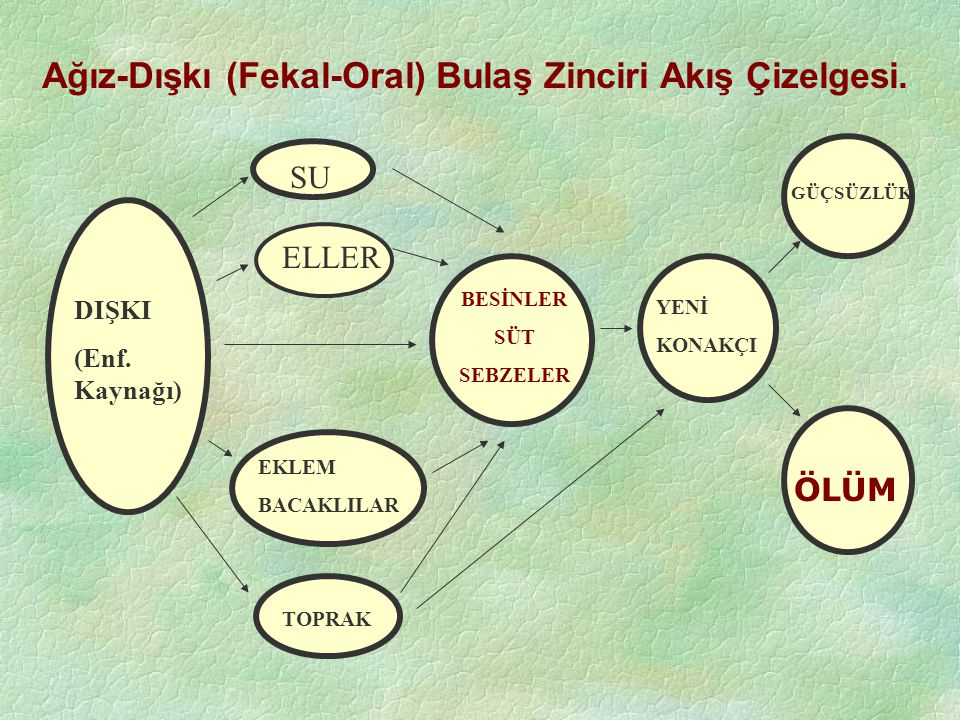 Ağız-Dışkı (Fekal-Oral) Bulaş Zinciri Akış Çizelgesi.