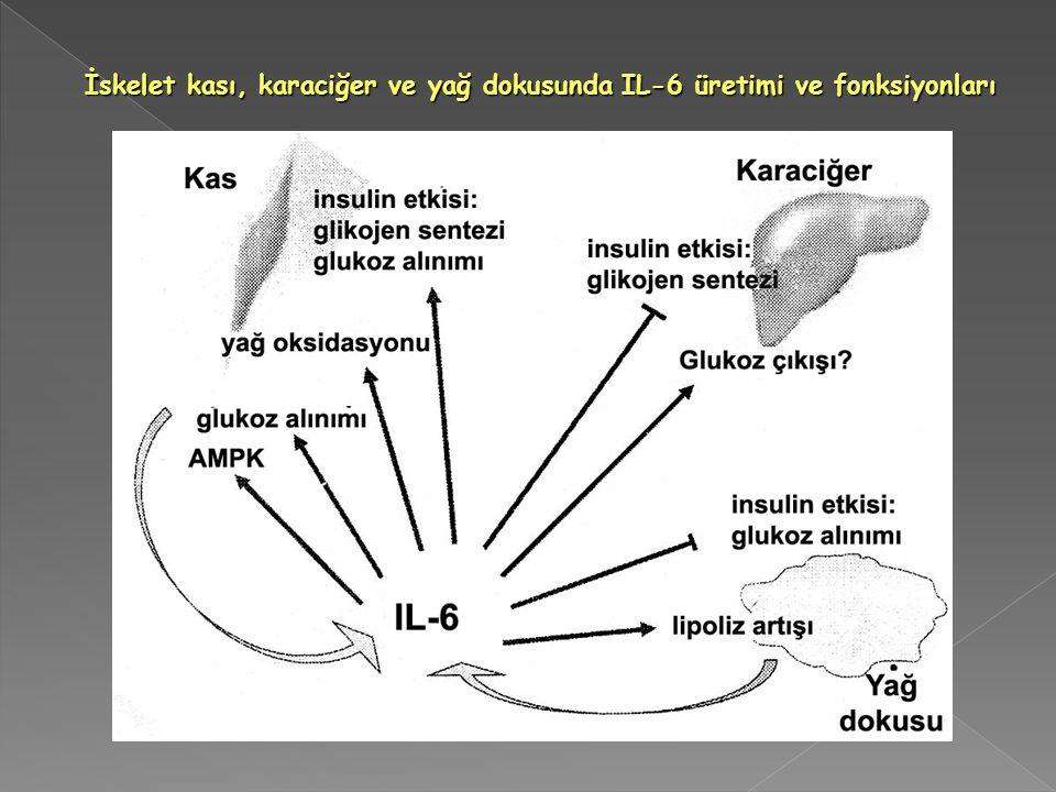 İskelet kası, karaciğer ve yağ dokusunda IL-6 üretimi ve fonksiyonları