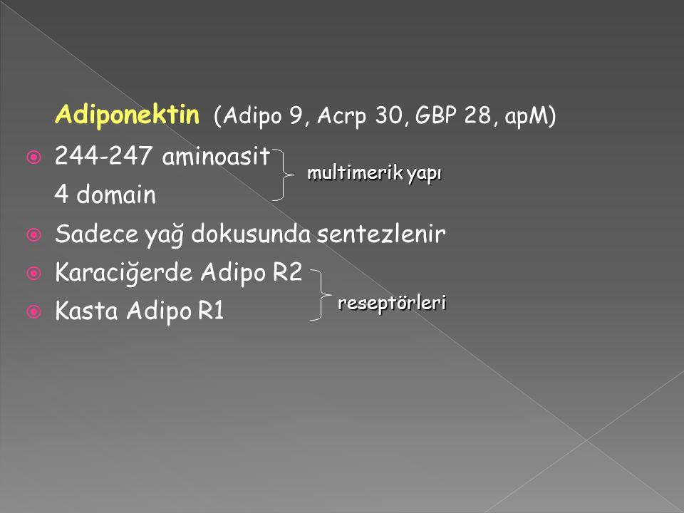 Sadece yağ dokusunda sentezlenir Karaciğerde Adipo R2 Kasta Adipo R1