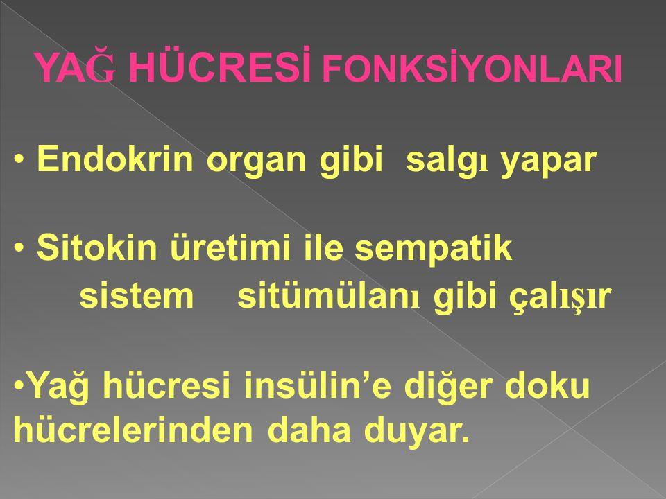 YAĞ HÜCRESİ FONKSİYONLARI Endokrin organ gibi salgı yapar