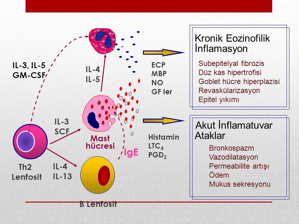 Kronik Eozinofilik İnflamasyon Akut İnflamatuvar Ataklar IgE Eozinofil
