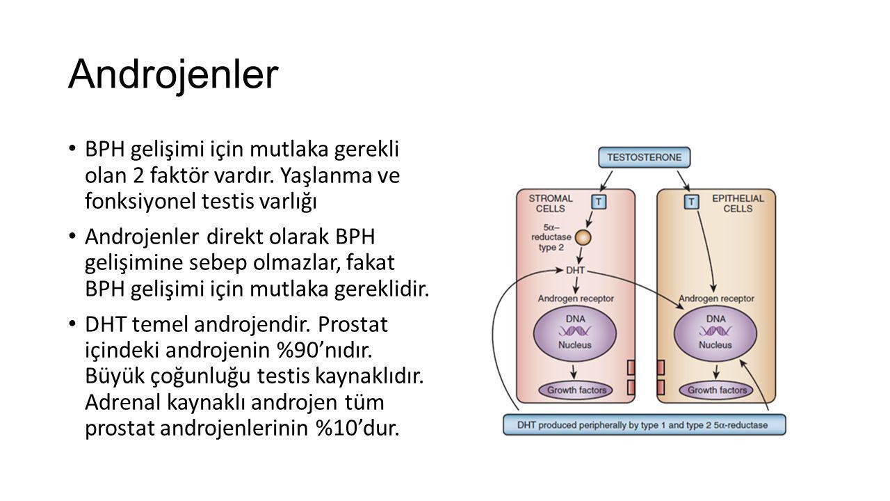 Androjenler BPH gelişimi için mutlaka gerekli olan 2 faktör vardır. Yaşlanma ve fonksiyonel testis varlığı.