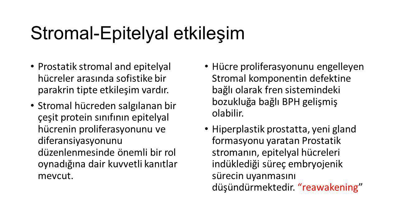 Stromal-Epitelyal etkileşim