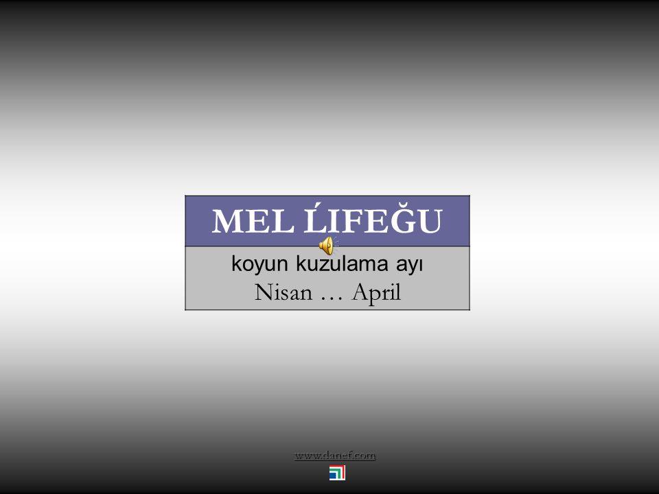 MEL ĹIFEĞU koyun kuzulama ayı Nisan … April www.danef.com