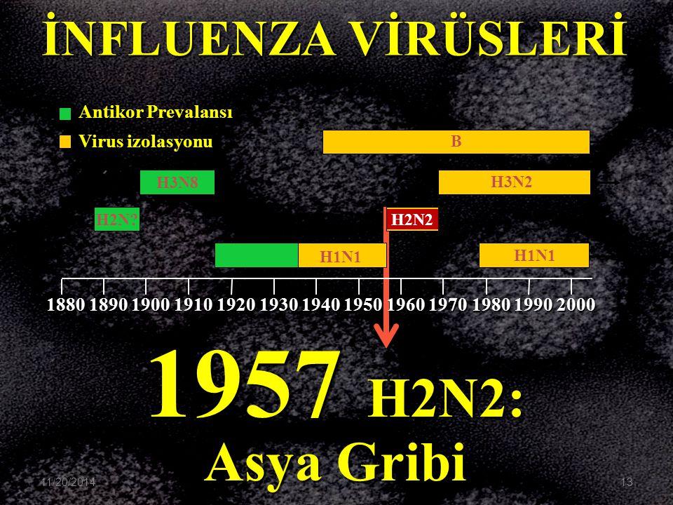 1957 H2N2: Asya Gribi İNFLUENZA VİRÜSLERİ Antikor Prevalansı
