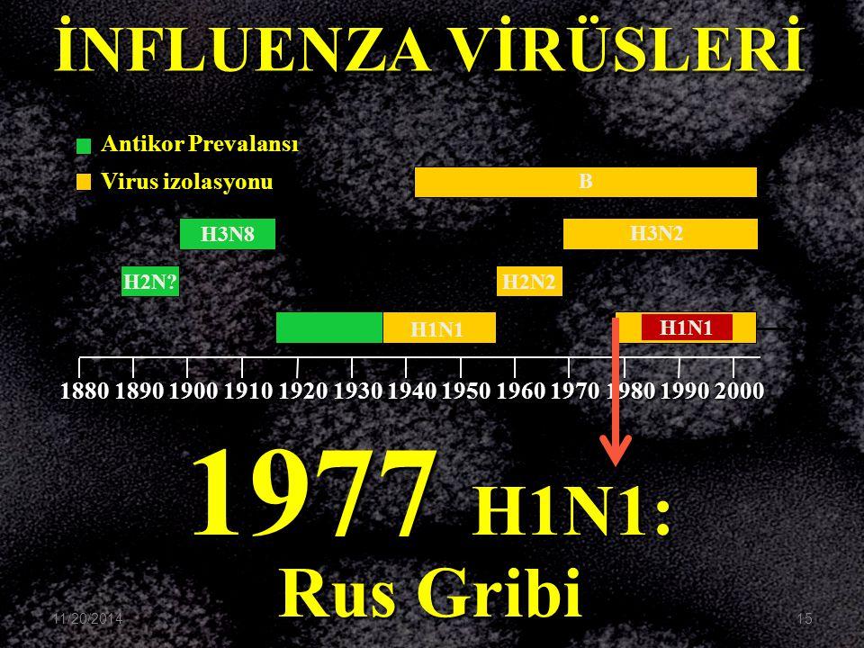 1977 H1N1: Rus Gribi İNFLUENZA VİRÜSLERİ Antikor Prevalansı